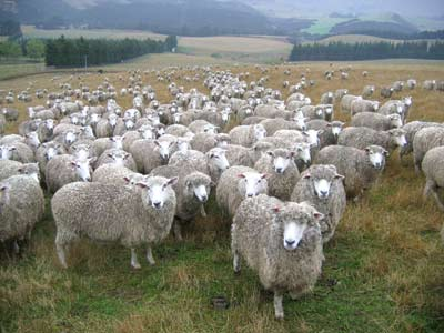 Blanchette-Are-Ewe-Lookin-At-Me
