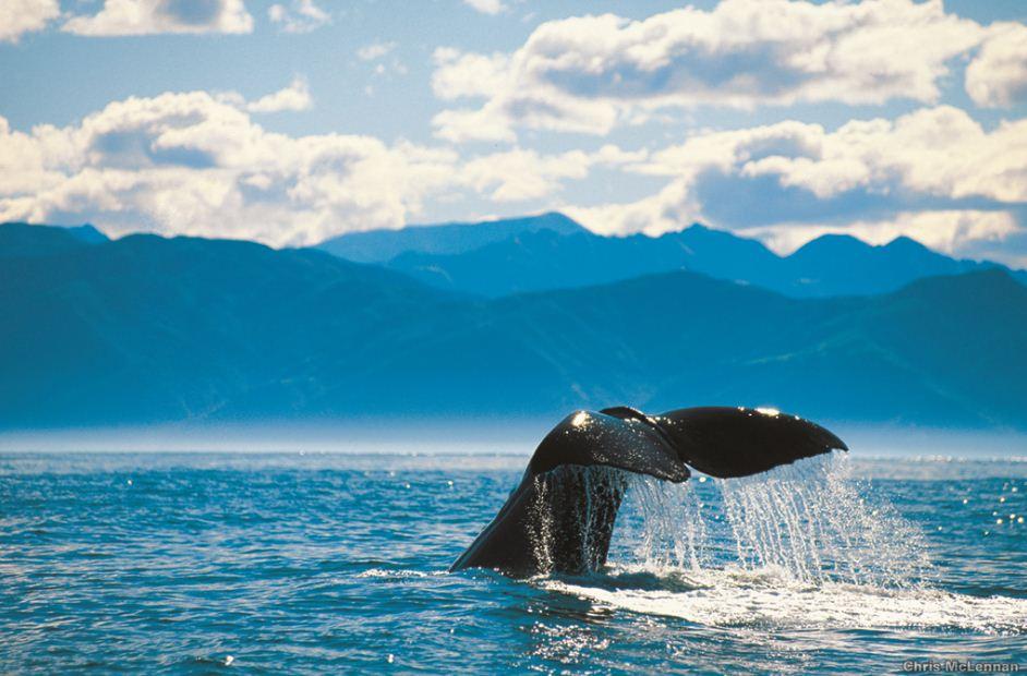 Whale Tail - Kaikoura