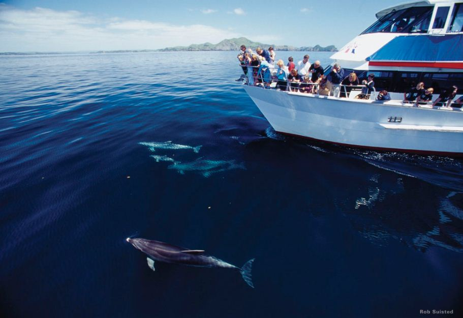 Bottlenose Dolphins - Bay Of Islands