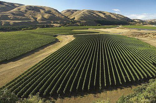 Wine-Country-Wairarapa